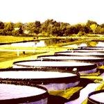 plaza-aqua-farm